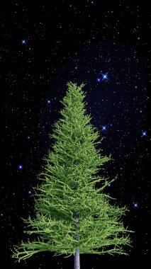 Christmas fir isolated below shining stars