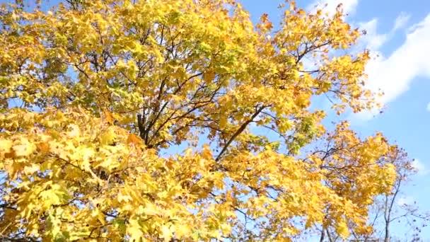 podzimní park žluté listy