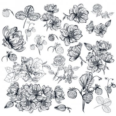 Vector pack of engraved high detailed flowers for design