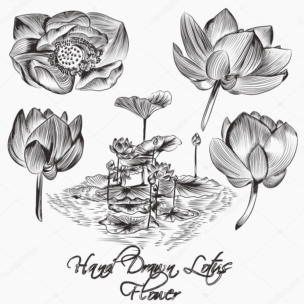 Collection of vector hand drawn vector lotus  flowers