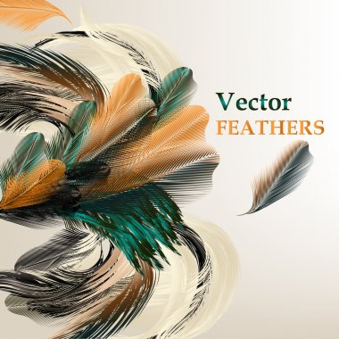 Background with vector realistic bird feathers