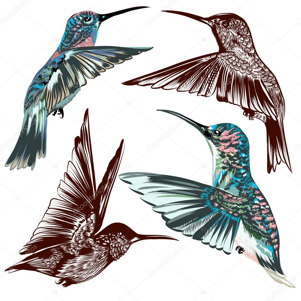 Collection of vector hand drawn hummingbirds