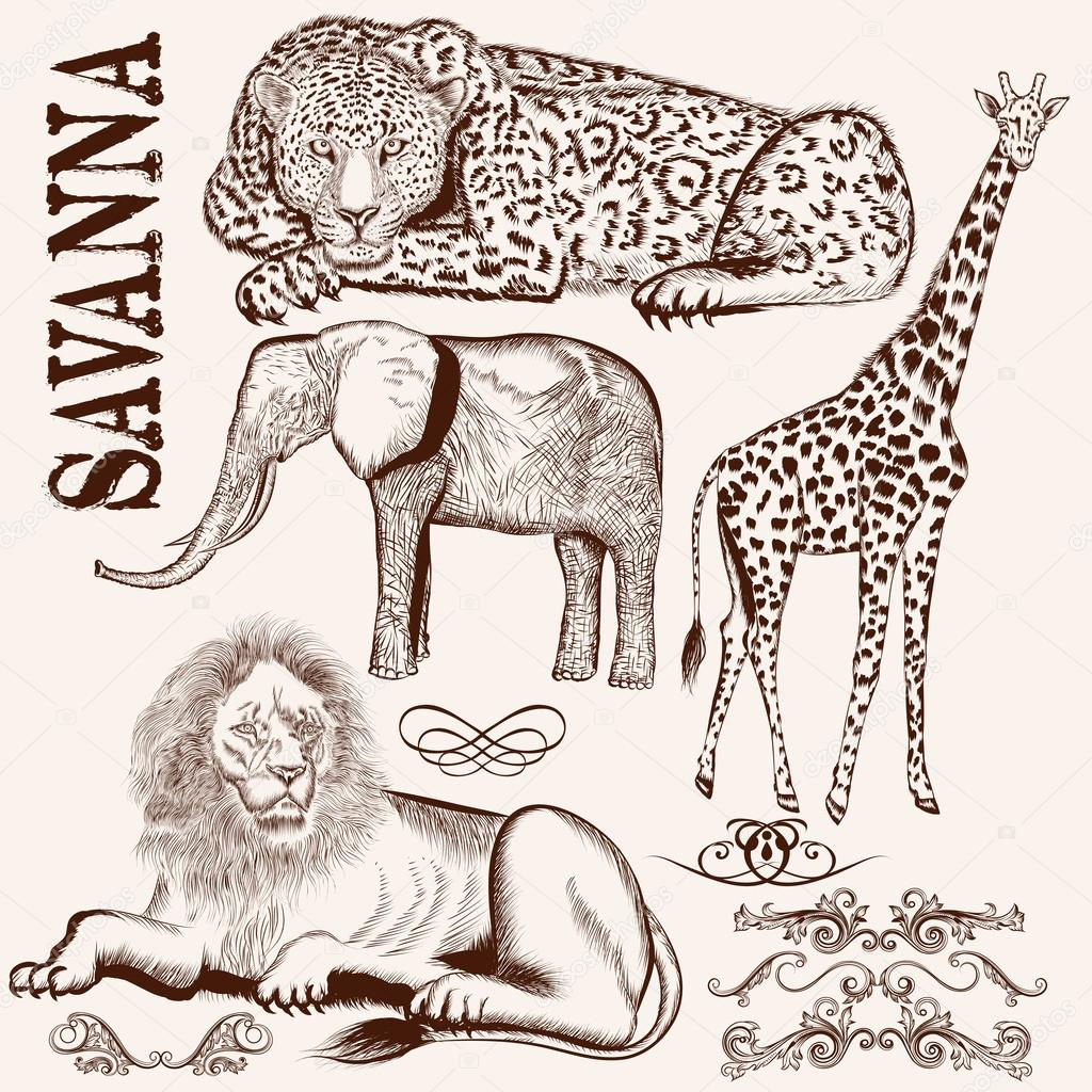 Collection of vector hand drawn savanna animals