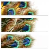 Módní barevné pozadí s pavími pery