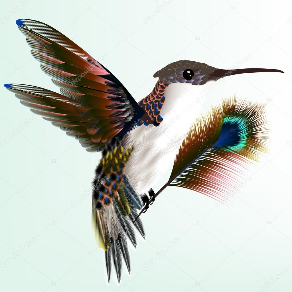 Colorful hummingbird with peacock feather