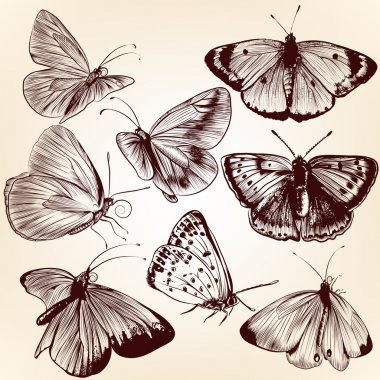 Collection of vector hand drawn butterflies for design