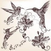 Kolekce vektoru ručně tažené kolibříci pro design