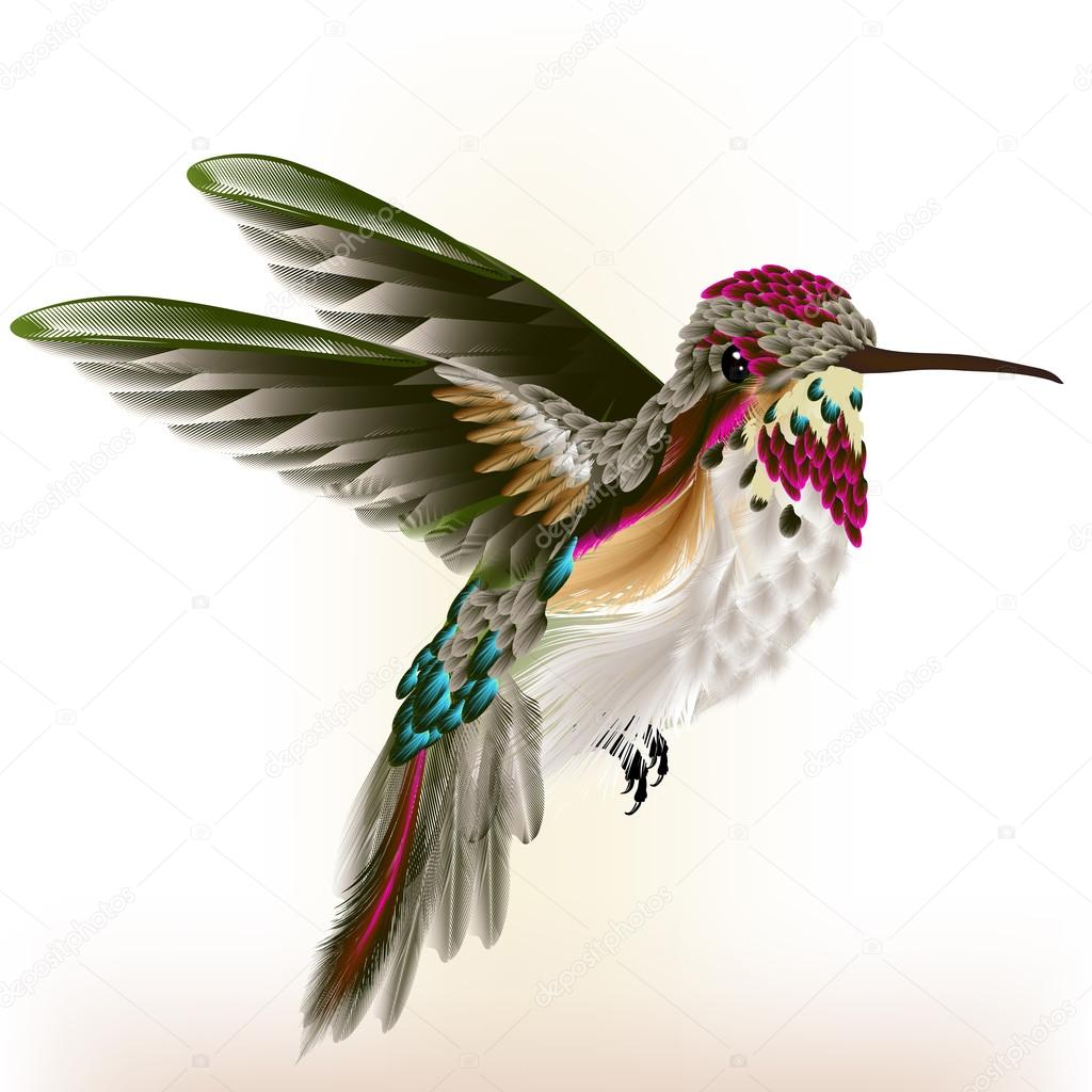 Beautiful colorful  hummingbird in fly