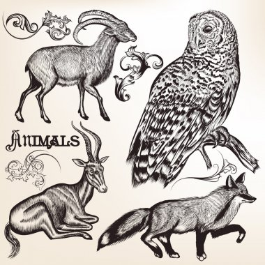 Hand drawn animals for design