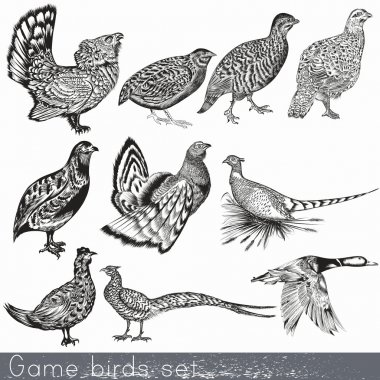 Set of detailed hand drawn game birds