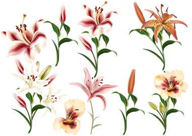 Collection of realistic and beautiful vector lily flowers in watercolor style stock vector