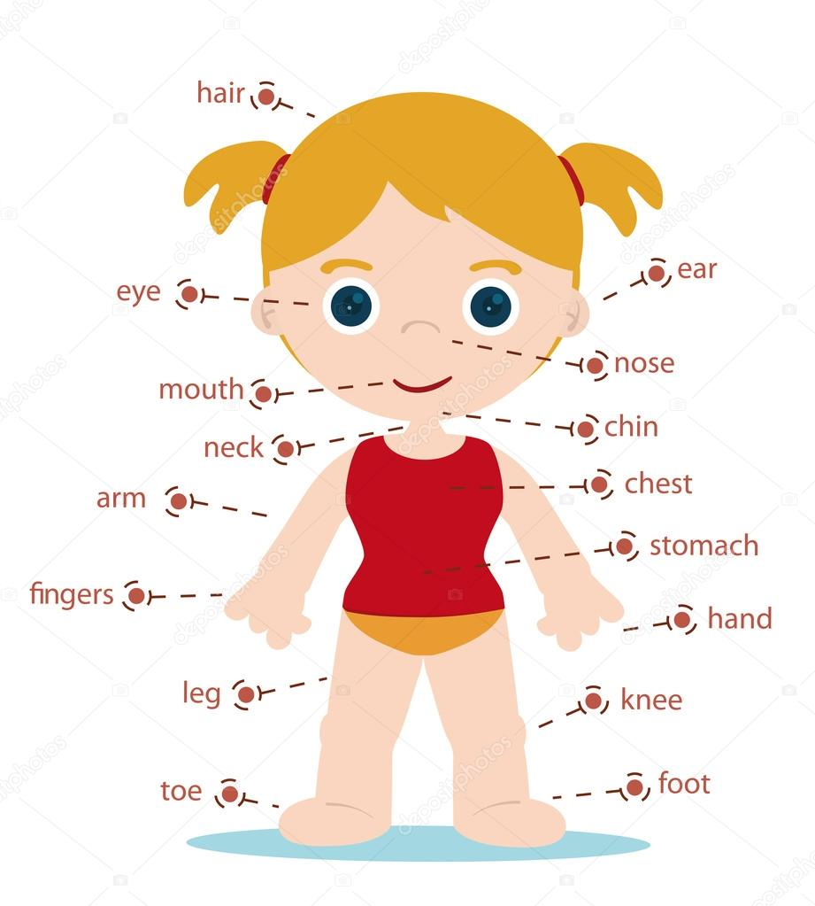 Girls Body Parts Name In English