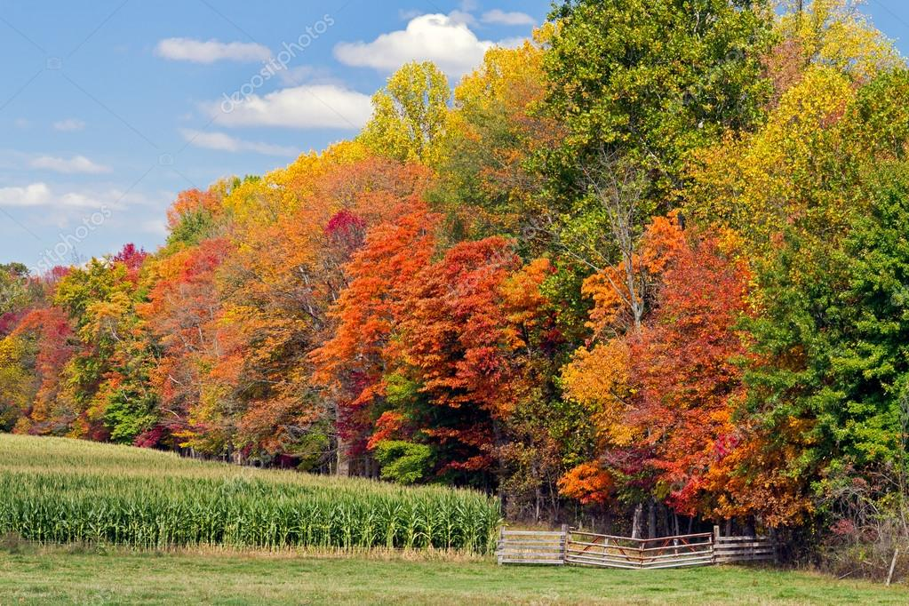 Autumn Trees and Cornfield