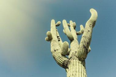 Iconic Saguaro Cactus Tree