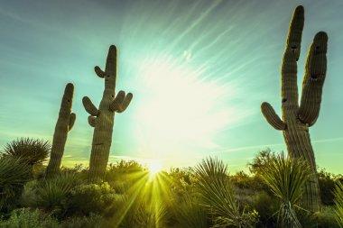 Desert sunset over valley of the Sun