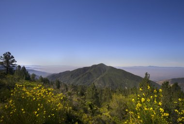 San Bernardino National Forest, Ca,USA near Big Bear Lake