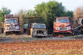 Cyprus old truck cemetery