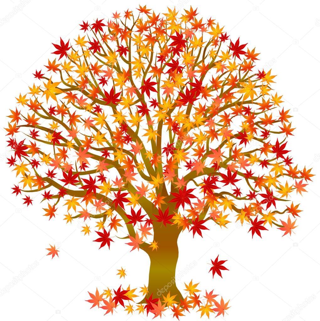 Rbol de arce de hojas de oto o archivo im genes - Descargar autumn leaves ...