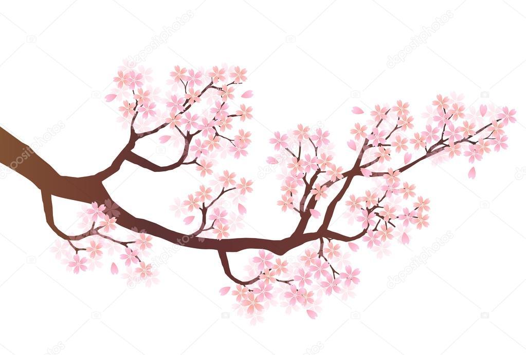 Kirschblüten melden Zeichen in Prominente datieren nicht