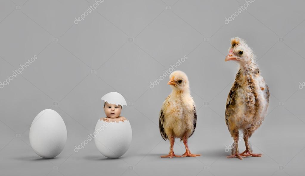Chicks and egg
