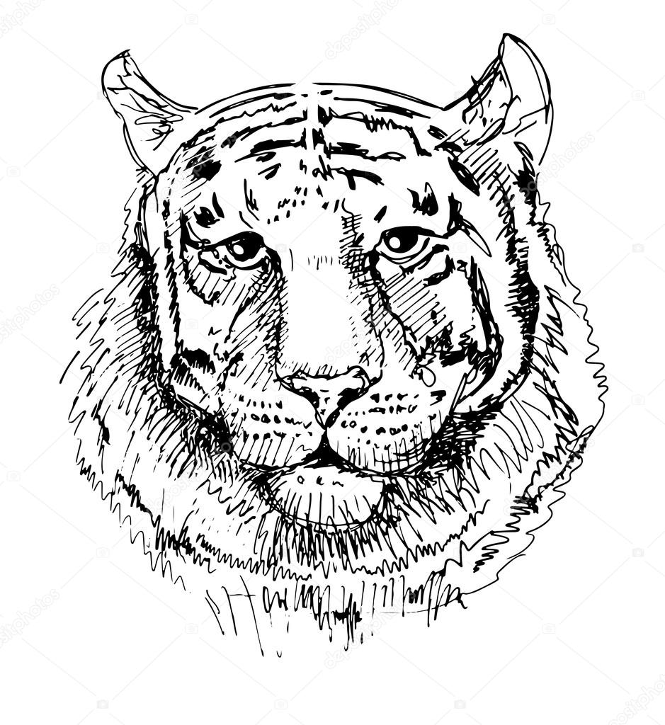 Tigre Di Opera Darte Schizzo Disegno Bianco E Nero Vettoriali