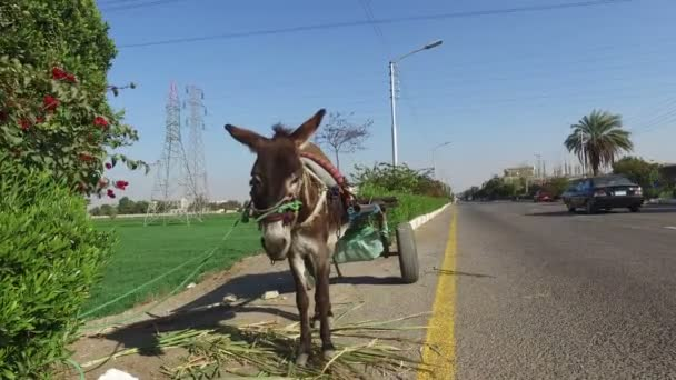 donkey with cart alongside road