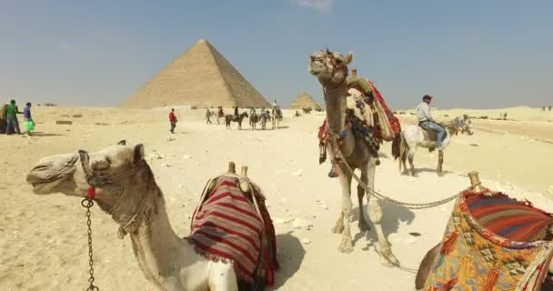 Camels for rent in front of Pyramid