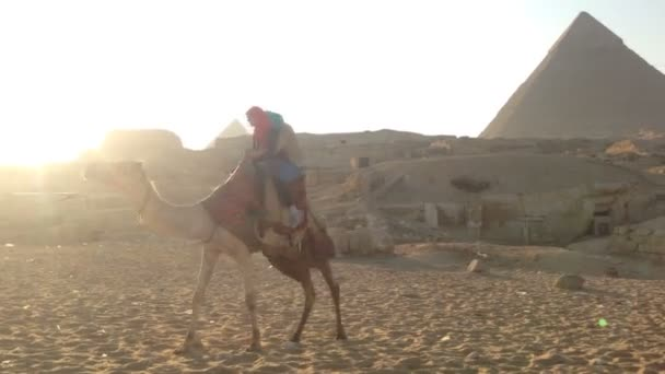 tourists riding a camel at Giza pyramids