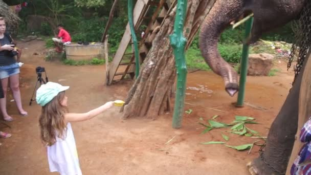 Little girl feeding an elephant in Sigiriya