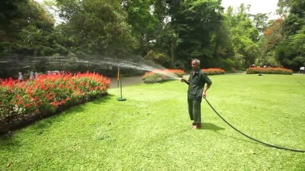 zahradník zalévat květiny v zahradě