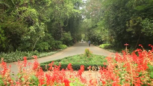 Botanická zahrada v Kandy