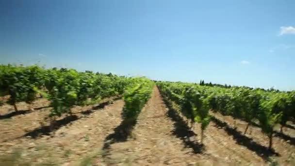 Jízdy kolem vinice ve Francii