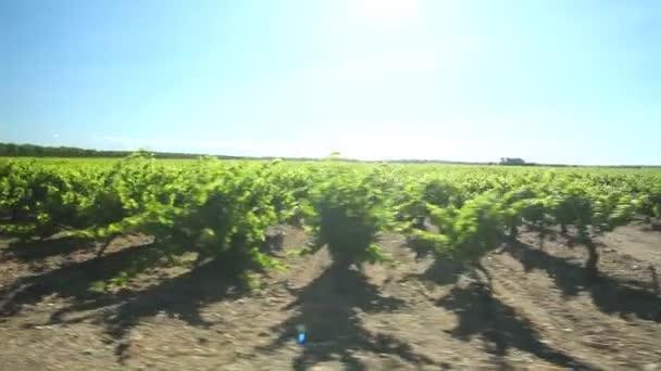 Jízdy kolem vinic