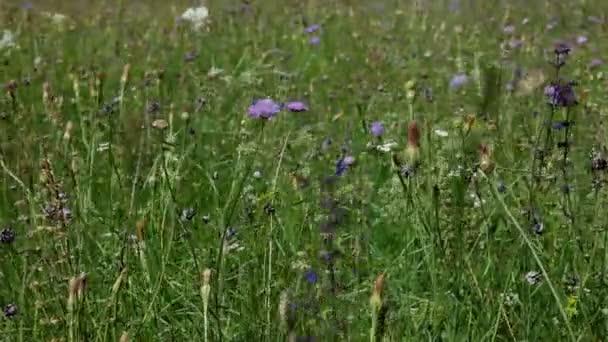 Kytice v poli v krajině