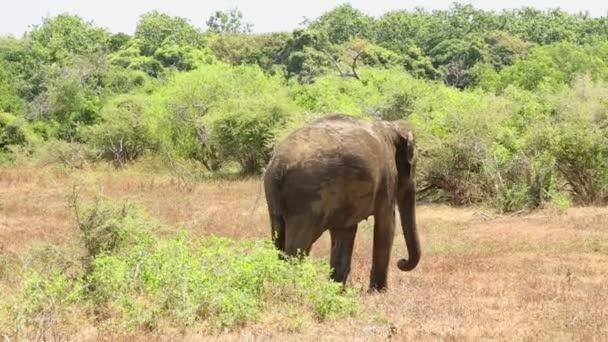 Yala Nemzeti Park az elefánt