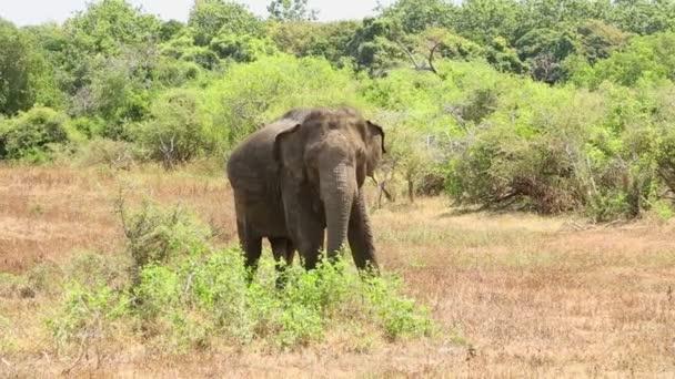 Slon v národním parku Jala