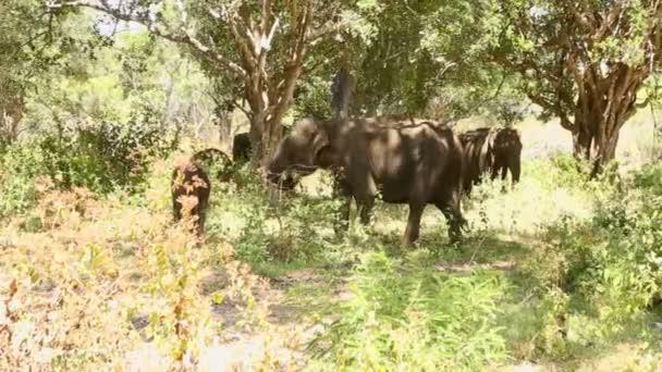 sloni v národním parku Jala
