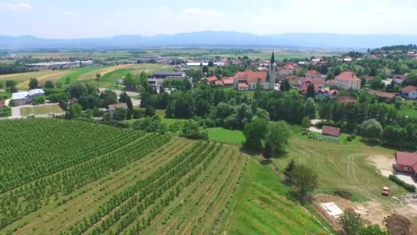 vinice pole ve Slovinsku