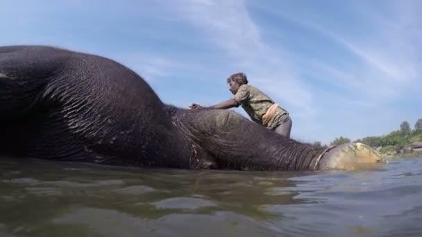 muž mytí slon ve vodě