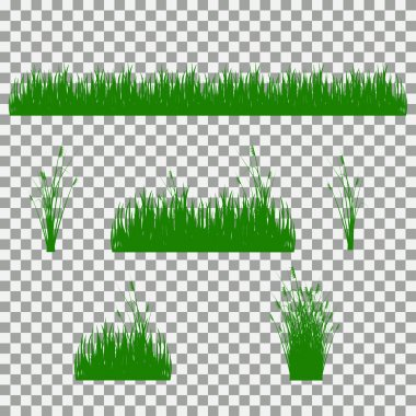 grass, shrubs. A set of various types of grass. Set of grass on a transparent background.