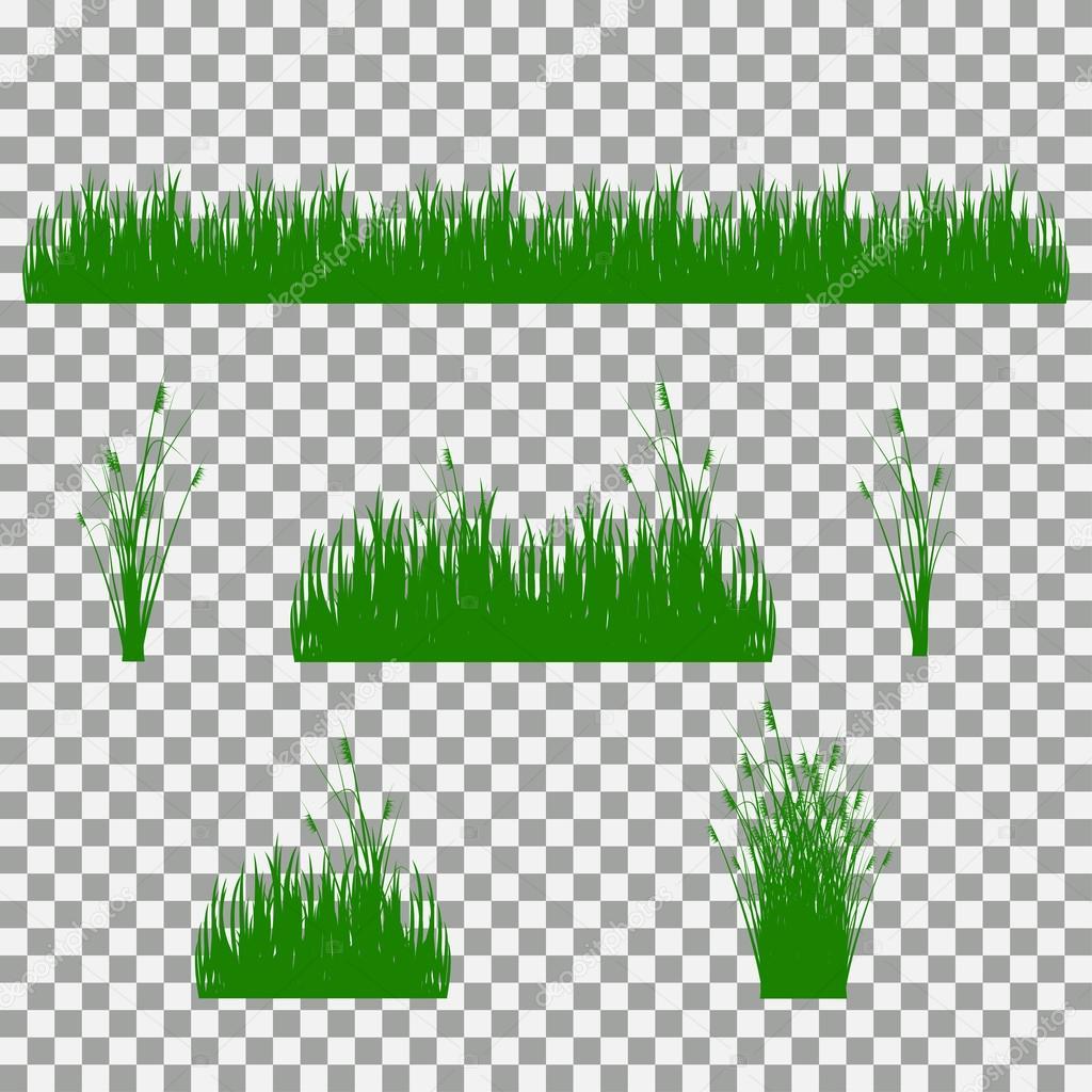 grass, shrubs. A set of various types of grass. Set of grass on a transparent background.