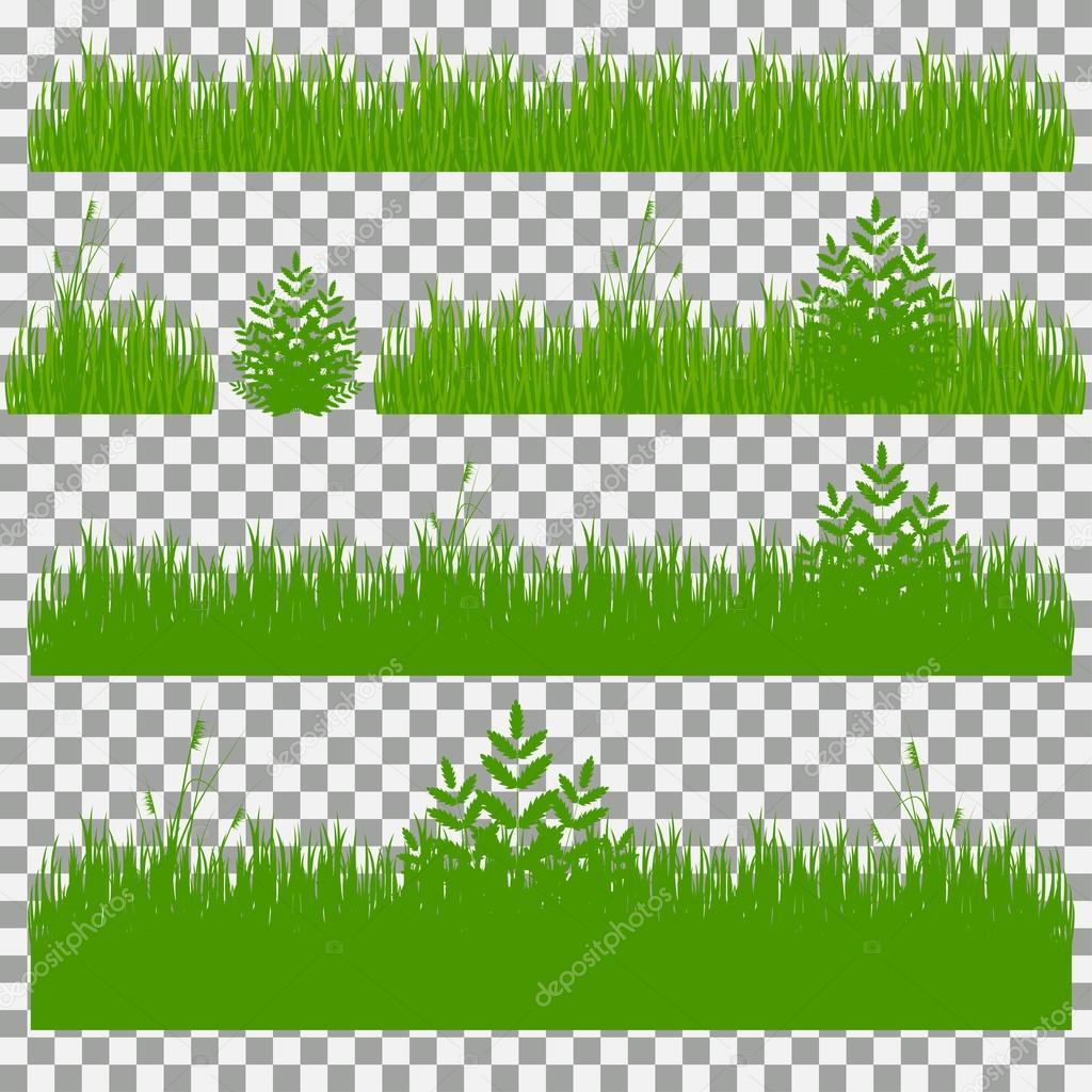 Erba arbusti un insieme di vari tipi di erba insieme di - Diversi tipi di erba ...