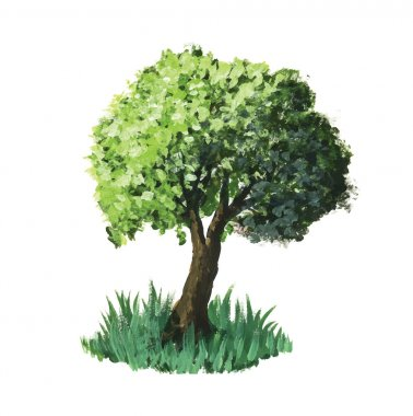 Watercolour vector image. Great green tree isolated on white clip art vector