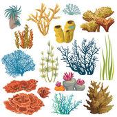 Fotografie Sada korálů a algaes
