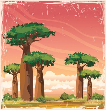 African landscape - baobabs and sunset sky.