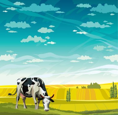Cow, herd and field