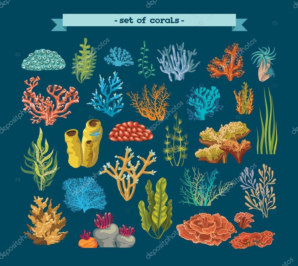 set di coralli e alghe   grafica vettoriale © natuska