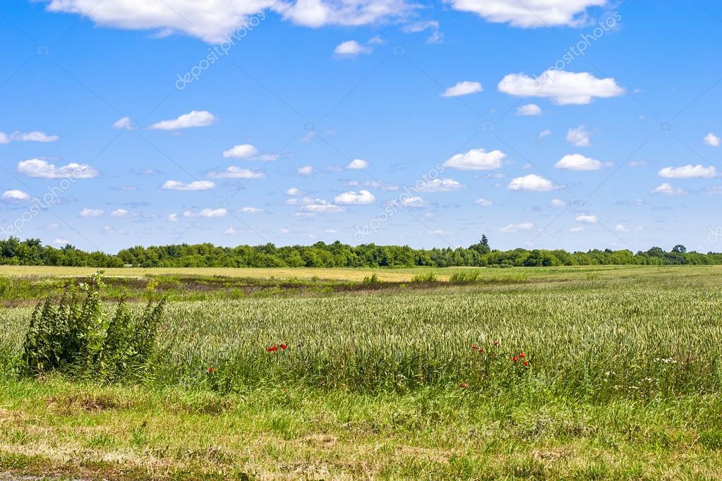 草地 — ストック写真 © Zeonn #6...