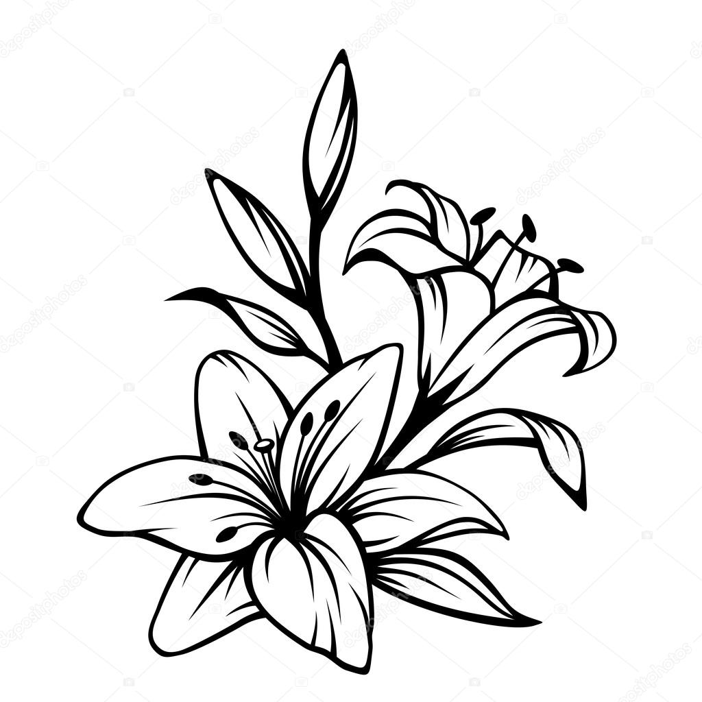 Black Contour Of Lily Flowers Vector Illustration Stock Vector