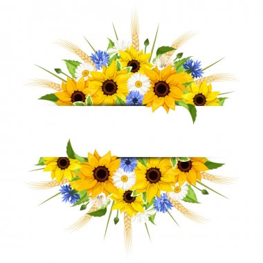Background with sunflowers, daisies, cornflowers and ears of wheat. Vector illustration.